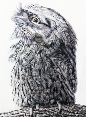 """Murphy the Optimist"" - Tawny Frogmouth Owl"