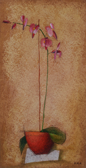 """Pink Orchid"""