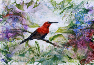 """The Crimson Sunbird"""