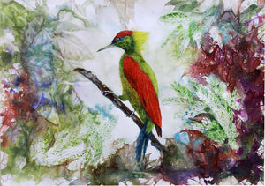 """The Crimson-winged Woodpecker"""
