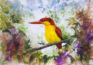 """The Oriental Dwarf Kingfisher"""