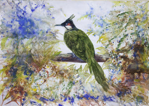 """The Red Whiskered Bulbul"""