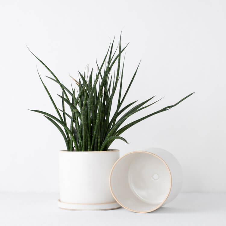 Convivial Minimal SAND Planters Jungle Pillows