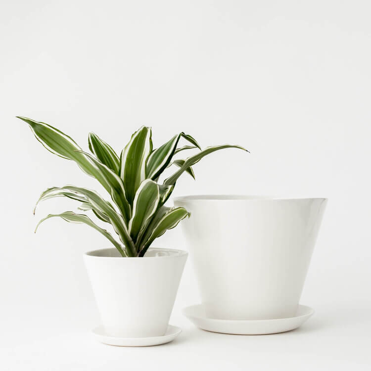 Convivial Minimal Vases Jungle Pillows