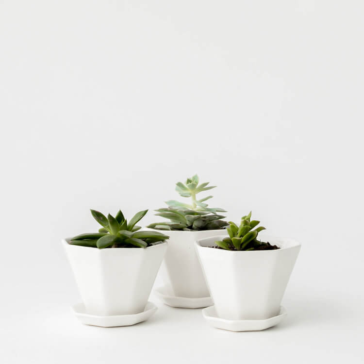 Convivial Mini Octagon Planter