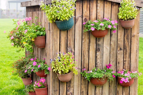 5 Tips for Growing a Beautiful Garden