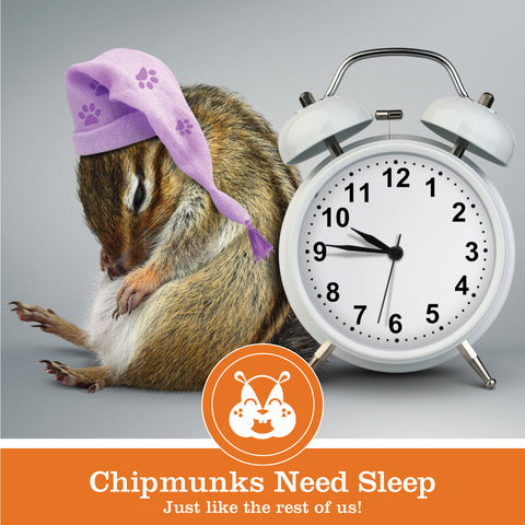 Sleepy Chipmunk