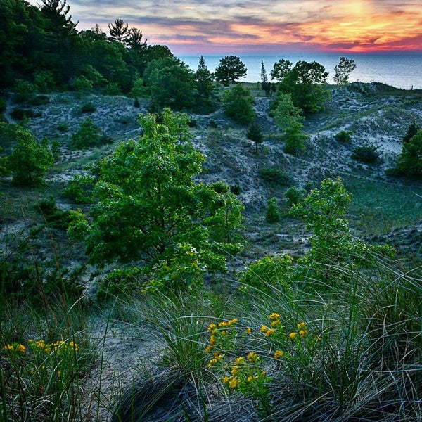 Indiana Dunes State Park Forest