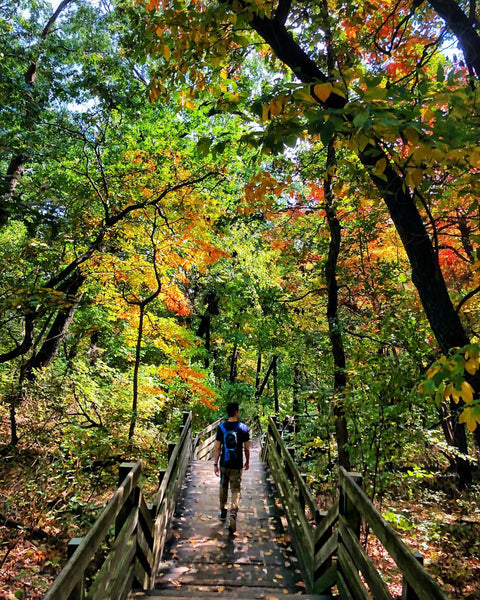 Starved Rock State Park Forest
