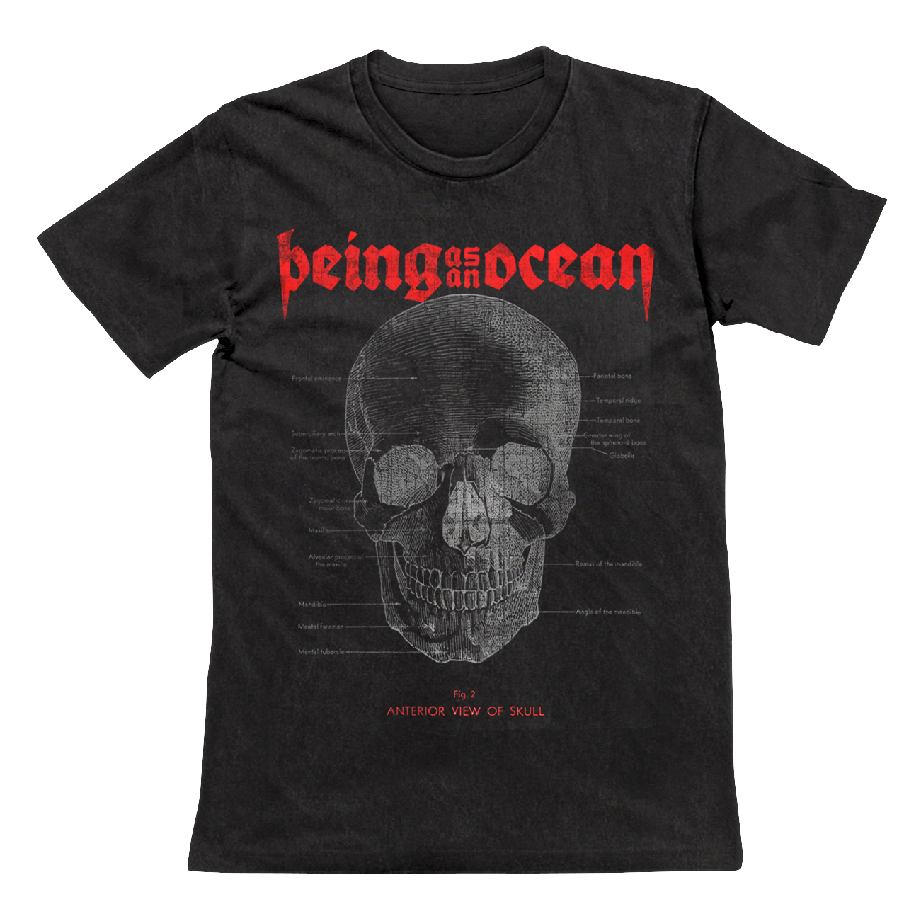 Anterior View of the Skull Tee