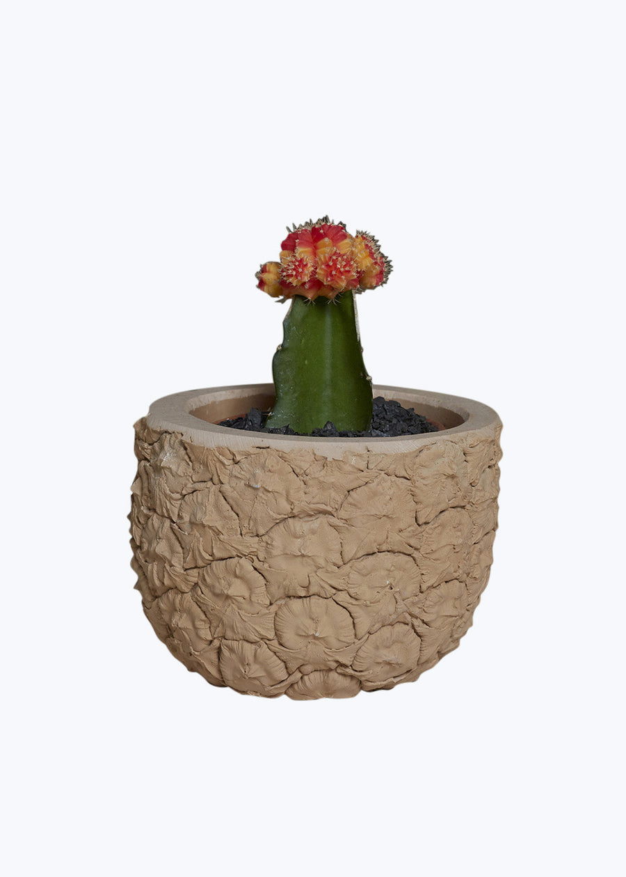 Orange Pineapple Planter