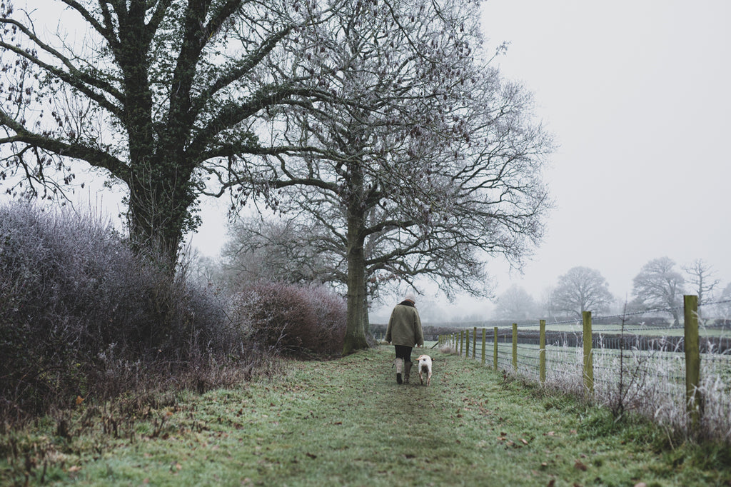 winter countryside walks with dog