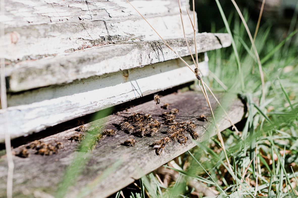 Norfolk UK honey bee hive