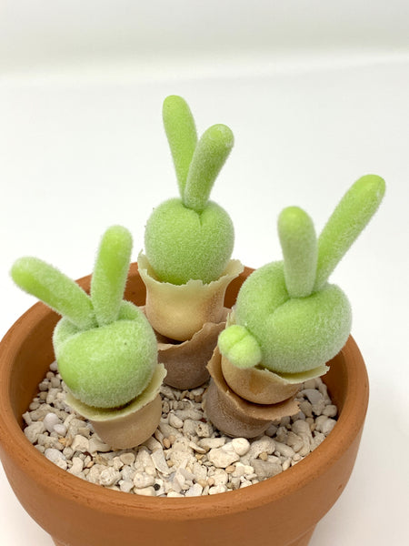 Air Dry Clay Bunny Succulents