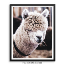 Cute Llama Art Print Alpaca Wall Poster by Sincerely, Not