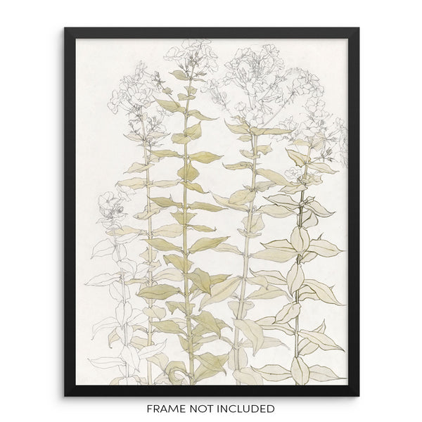 Vintage Botanical Art Print Phlox Flowers and Leaves Wall Poster