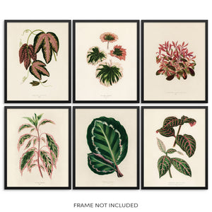 Vintage Botanical Leaf Art Prints Set Leaves and Plants Wall Posters