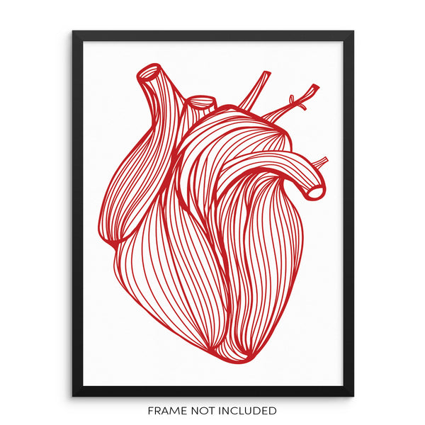 Anatomical Red Heart Modern Hand Drawn Wall Decor Art Print Poster by Sincerely, Not