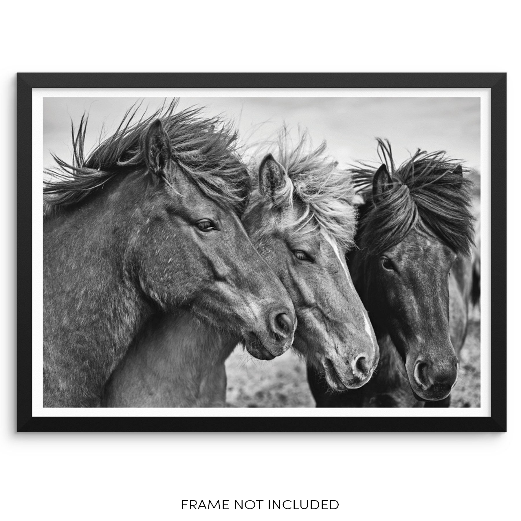 Sincerely Not Wild Horses Art Print Stallions Wall Poster