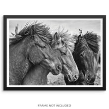 Wild Horses Art Print Black and White Stallions Wall Poster