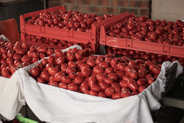 Passata Season 2020 - Getting Ready for New Season's Batch