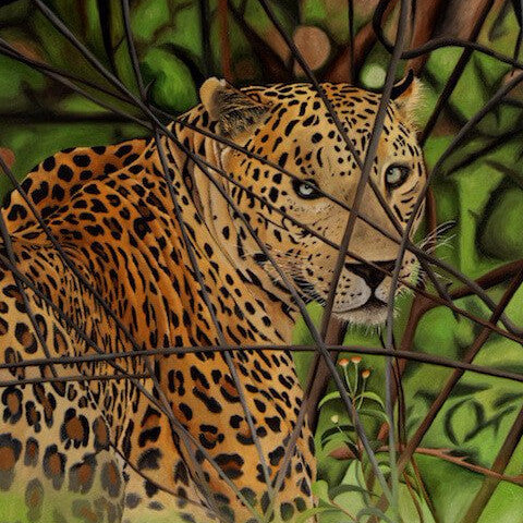 A Male Leopard - The Bandipur Tiger Reserve