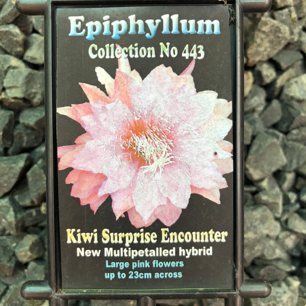 Epi. Hybrid Kiwi Surprise Encounter - 537 EH67 NEW