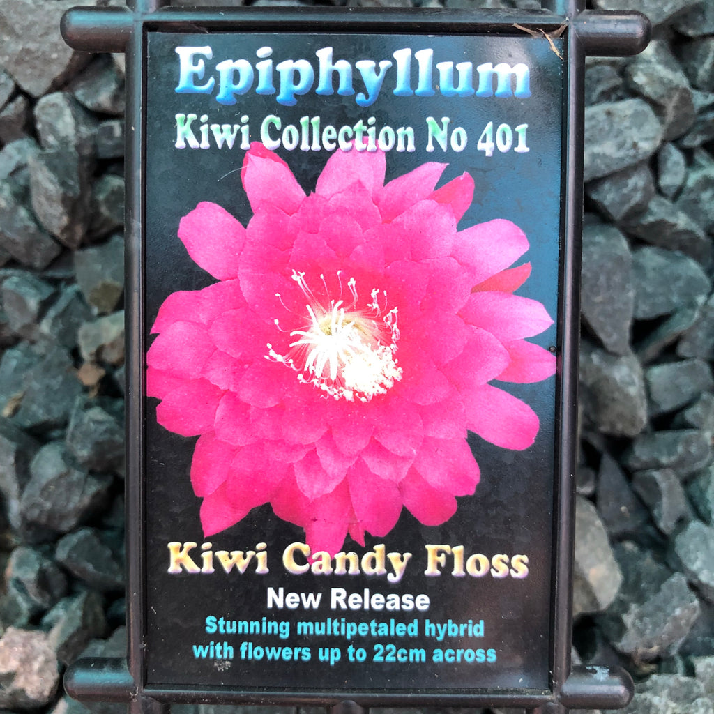 Epi. Hybrid Kiwi Candy Floss - 572 EH68 NEW