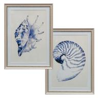 Beach Shells Wall Art