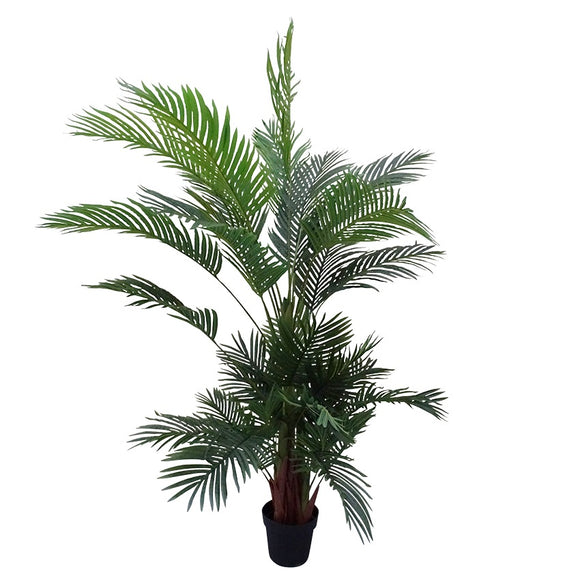 Areca Evergreen Palm