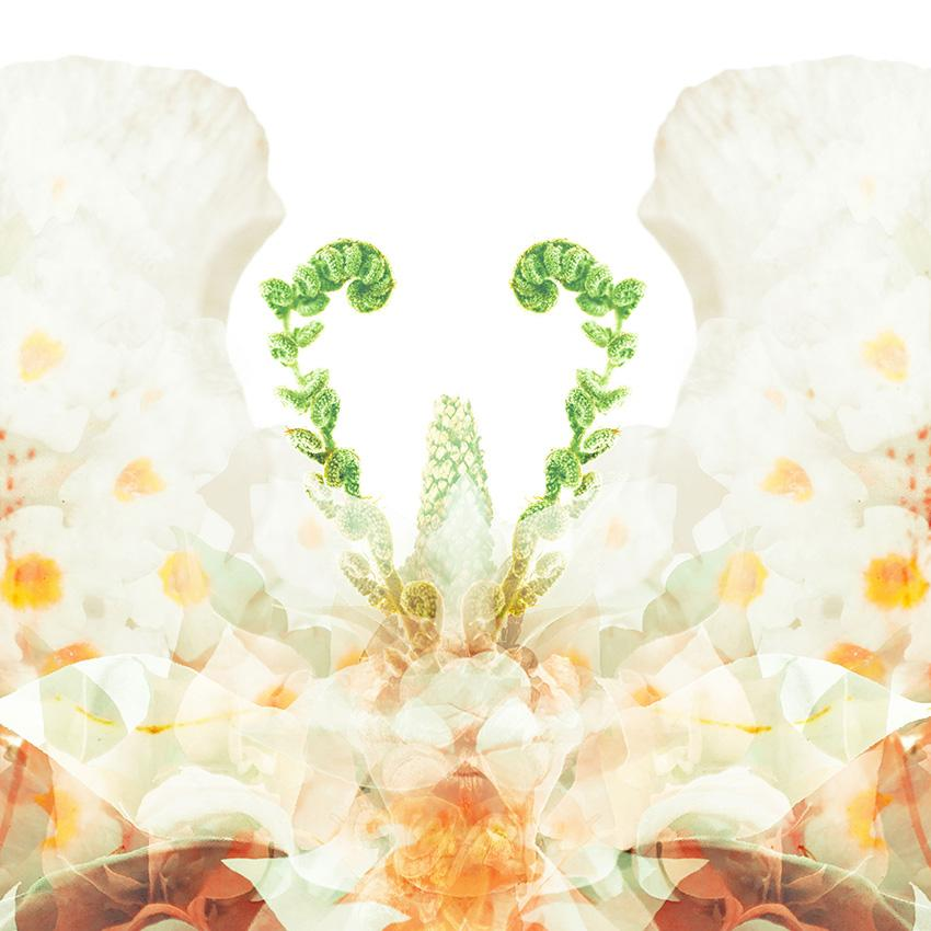 Flower Butterfly Art Print Collection | Paper and Flower