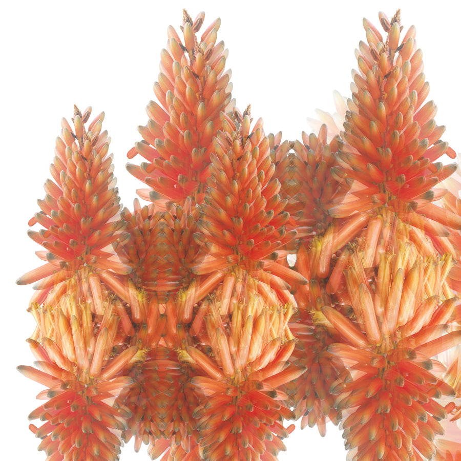 Orange Cactus Pattern Art Print | Paper and Flower | Floral Art Print