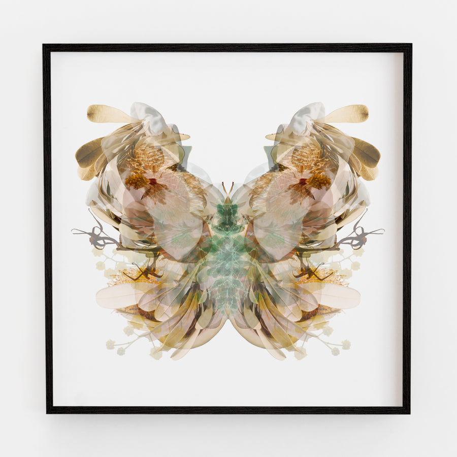 Chocolate Brown Moth | Paper and Flower | Floral Art