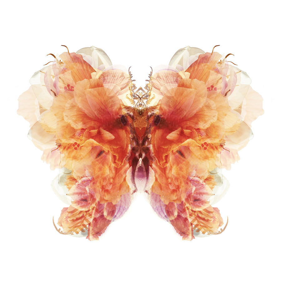 Burnt Orange Floral Butterfly | Paper and Flower | Art Print
