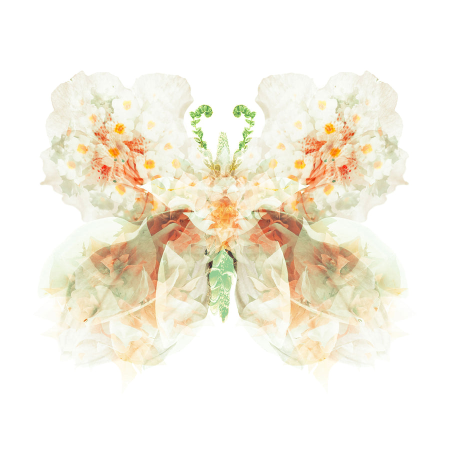 White Apricot Floral Butterfly | Paper and Flower | Art Print