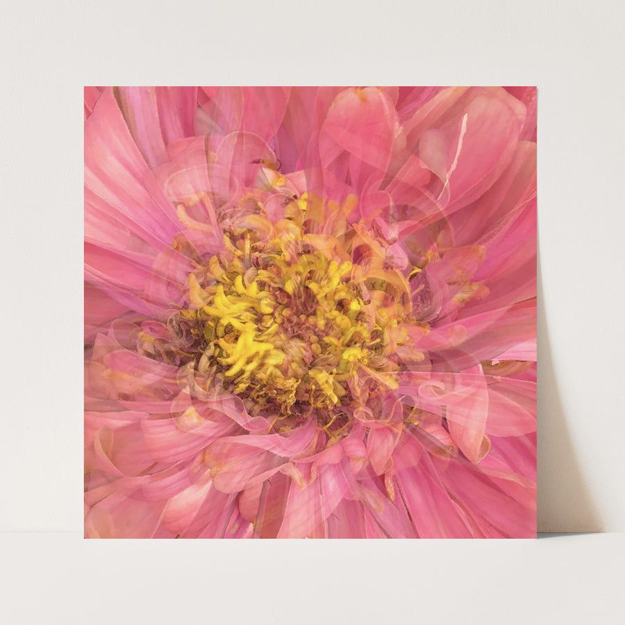Pink Daisy Heart | Paper and Flower | Floral Art Print