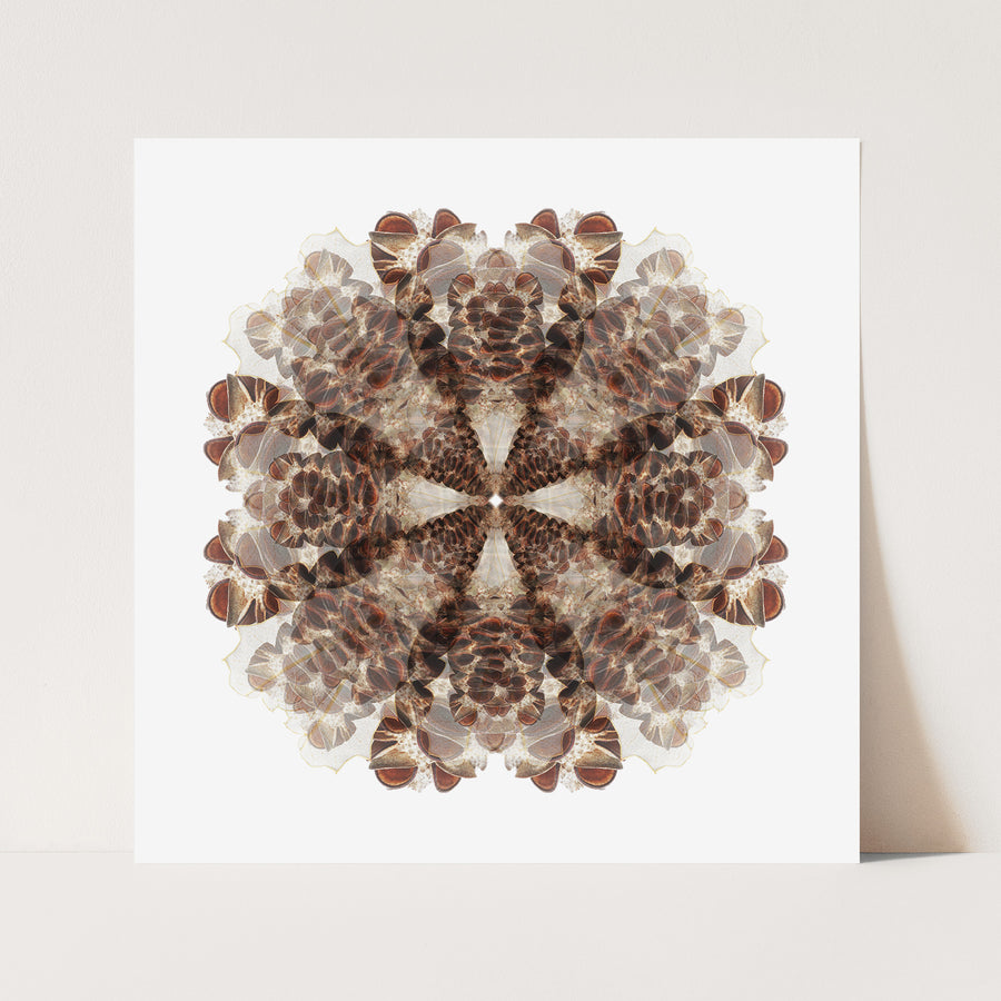 Brown Banksia Seed Pod | Paper and Flower | Floral Art Print