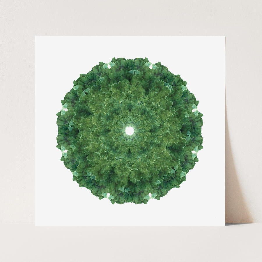 Green Geranium Mandala Pattern | Paper and Flower