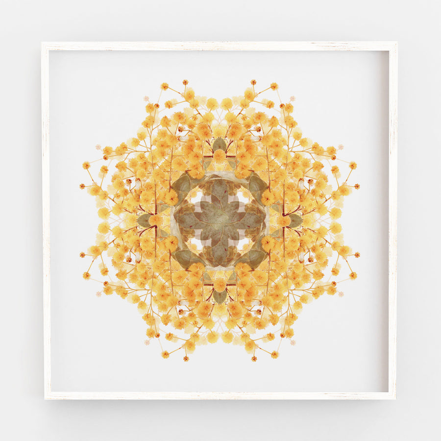 Wattle Flower Pattern | Paper and Flower | Floral Art Print