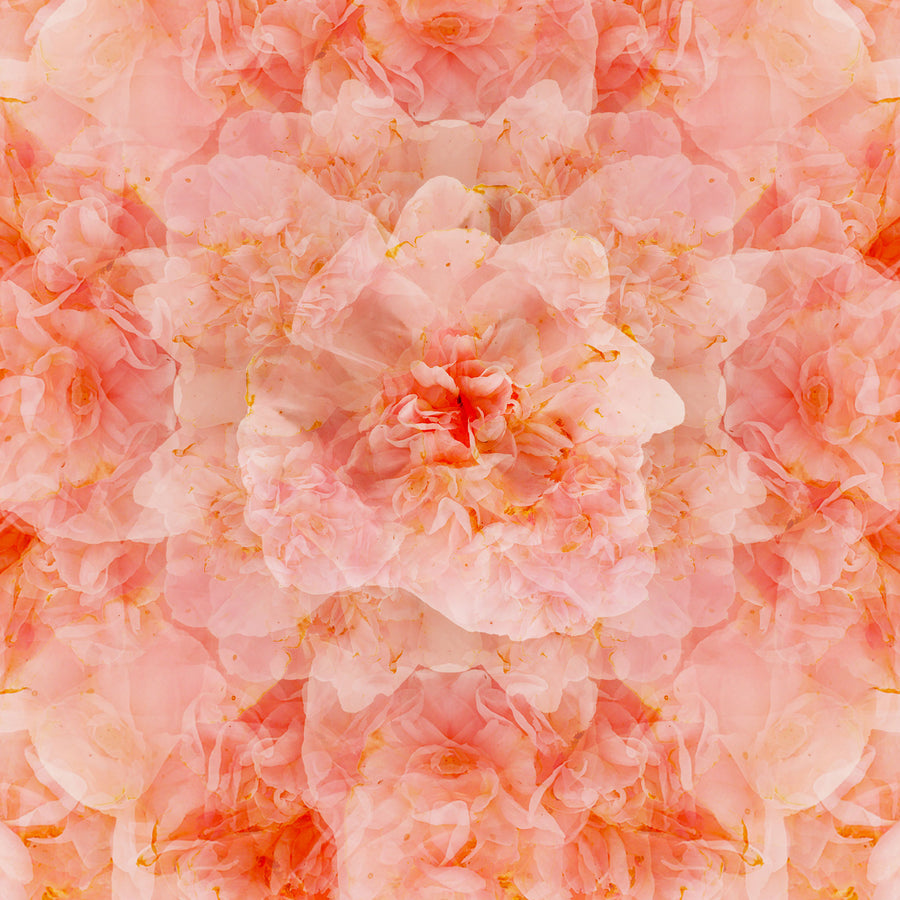 Pink Camillia Flower Mandala Pattern | Paper and Flower | Art Print