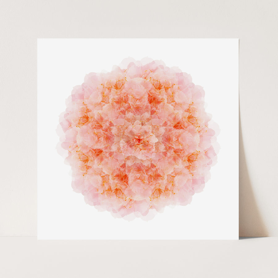 Pink Camellia Flower Mandala Pattern | Paper and Flower | Art Print