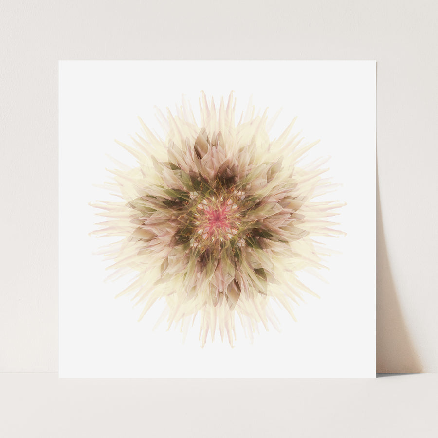 White Protea Flower Mandala | Paper and Flower | Floral Art Print