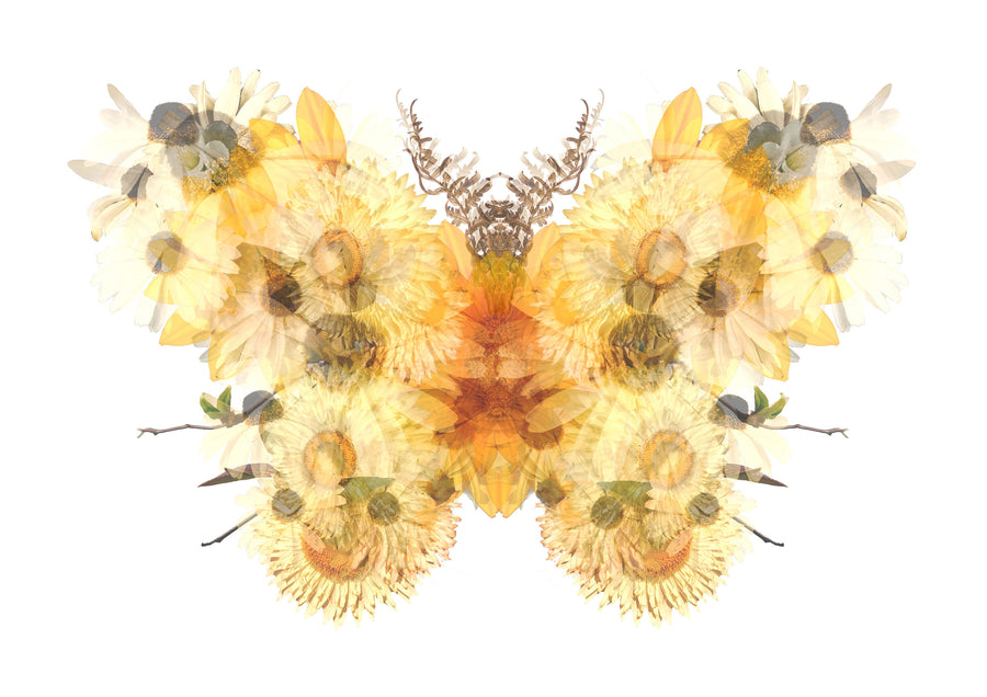 Yellow Floral Butterfly