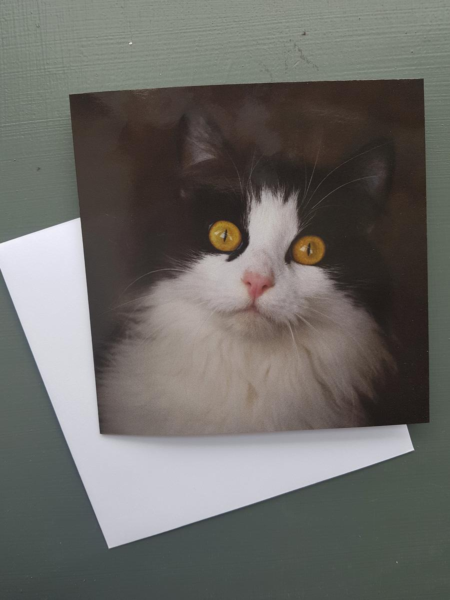 Farmhouse Cat Greeting card