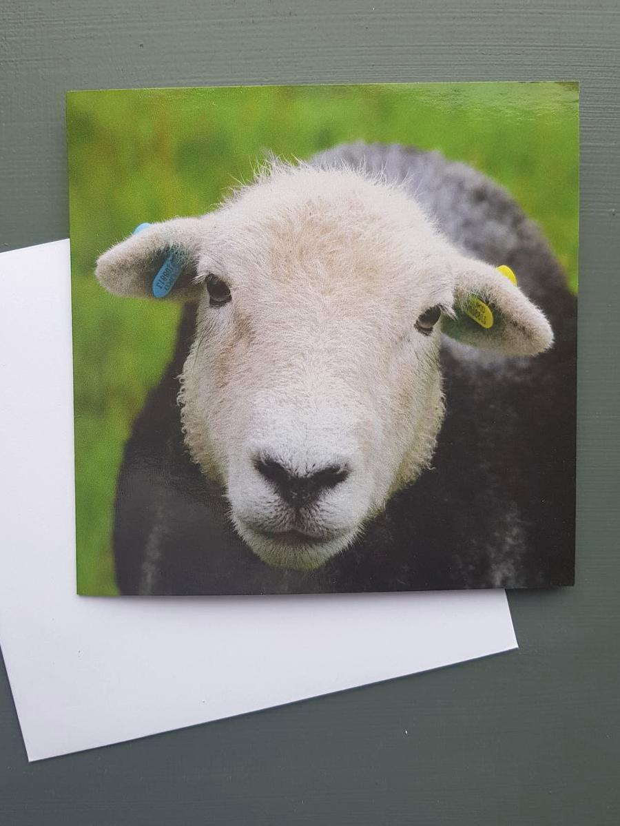 Molly the Herdwick Greeting card