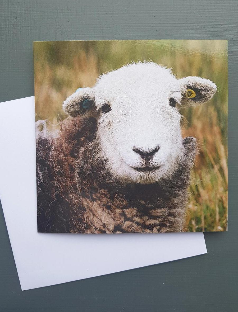 Herdwick Lamb Greeting card