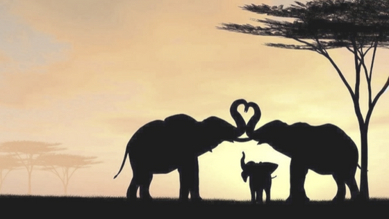 We Love Elephants!