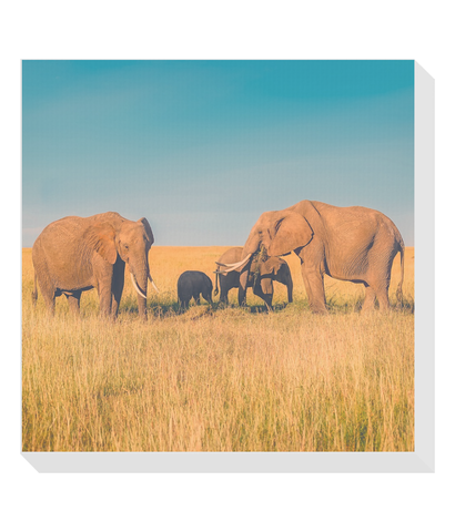 Elephant Family Savana Square Canvas