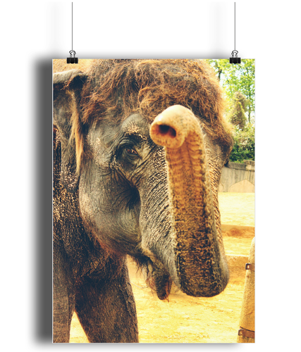Elephant Kiss Portrait Print