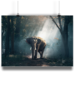 Elephant in the Forest Landscape Print
